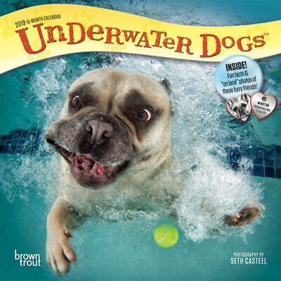 2019 Underwater Dogs Mini Wall Calendar,  by BrownTrout