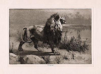 "LOOK Original 1800s HERBERT DICKSEE Etching ""Lion Challenge"" SIGNED Framed COA"