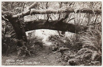 PRAIRIE CREEK PARK Humboldt California RPPC RP Real Photo Postcard ZAN STARK CA