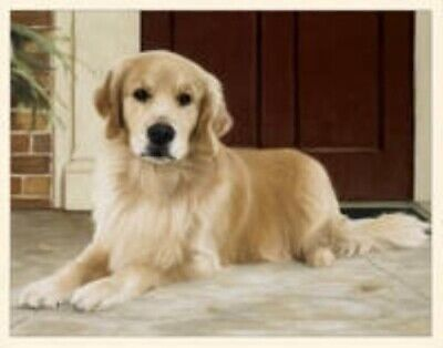 CLEARANCE..Dog Breed Paper GOLDEN RETRIEVER Boxed Notecards 10 per box