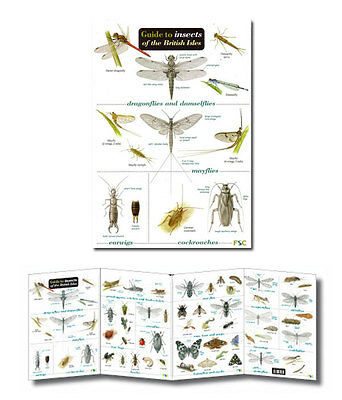 Field Guide Insects of the British Isles Laminated Identification Chart Poster