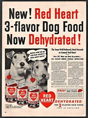 1942 WIRE FOX TERRIER (2) Red Heart Dog Food Vintage Photo AD Advertising