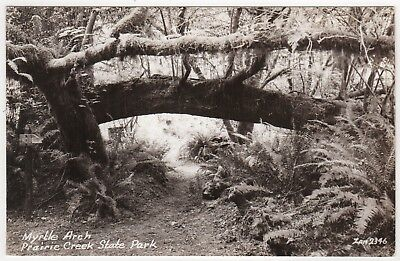 PRAIRIE CREEK PARK Humboldt California RPPC Real Photo Postcard ZAN STARK CA