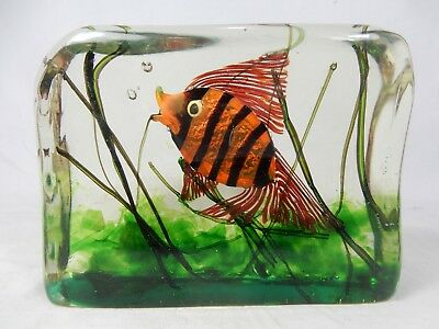 CENEDESE MURANO Glas Aquarium block sculpture fish & marine plants Fisch