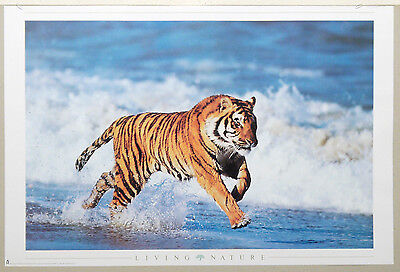 (Prl) Ritratto Tigre Tiger Living Nature Vintage Affiche Print Art Poster