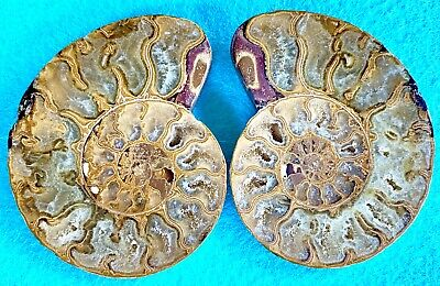 Ammonite Pair Agate Calcite Fossil Specimen Split Crystal Halves Sliced Polished