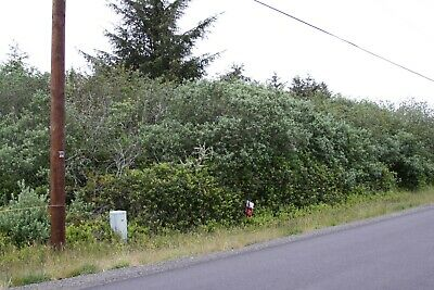Large Buildable Lot in Ocean Shores, WA. $2,500 Down. Utilities at the street.