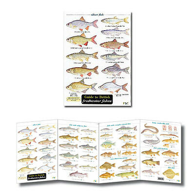 Field Guide to British Freshwater Fishes Laminated Identification Chart Poster