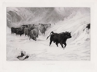 "Impressive John MacWhirter 1800s Etching ""Cattle in the Storm"" Framed SIGNED COA"