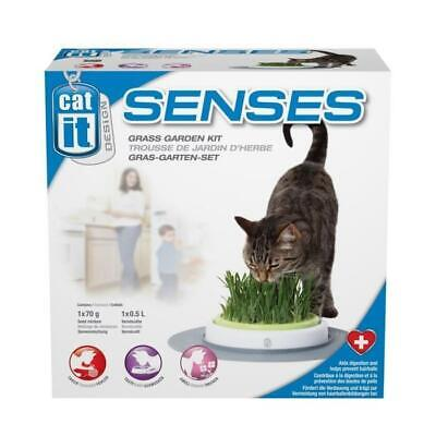 Jardin herbe a chat