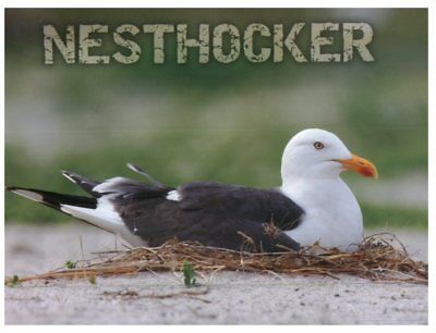 (Mix 800) postcard of Germany - Bird - Nesthocker