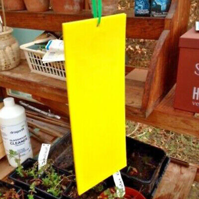 Double Sided Large Greenhouse Sticky Traps Catch Multiple Flying Insect Pests UK