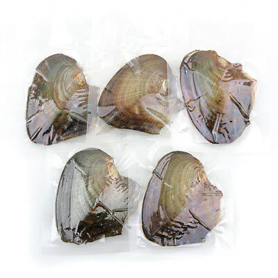 CA 35PCS Individually Wrapped Oysters Large with Pearl Birthday Wish Gifts NEW