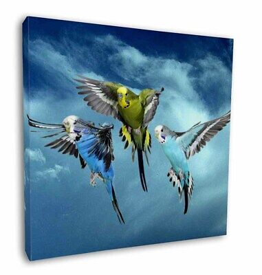 """Budgies in Flight 12""""x12"""" Wall Art Canvas Decor, Picture Print, AB-96-C12"""