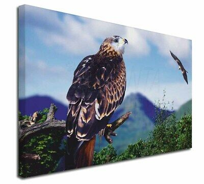 """Red Kite Bird of Prey 30""""x20"""" Wall Art Canvas, Extra Large Picture, AB-105-C3020"""