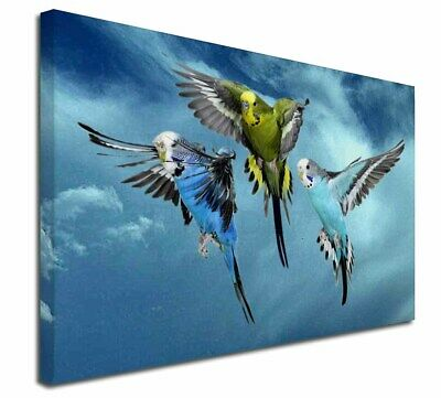 """Budgies in Flight 30""""x20"""" Wall Art Canvas, Extra Large Picture Prin, AB-96-C3020"""