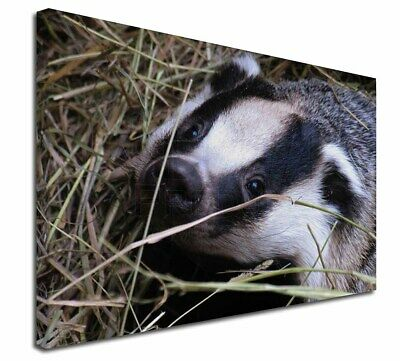 """Badger in Straw 30""""x20"""" Wall Art Canvas, Extra Large Picture Print , ABA-1-C3020"""