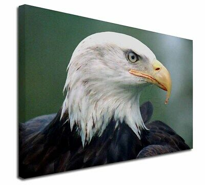 "Eagle, Bird of Prey 30""x20"" Wall Art Canvas, Extra Large Picture Pr, AB-E6-C3020"