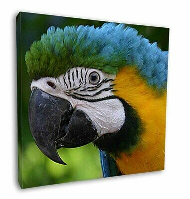 """Blue+Gold Macaw Parrot 12""""x12"""" Wall Art Canvas Decor, Picture Print, AB-PA10-C12"""