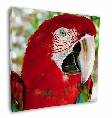 """Green Winged Red Macaw Parrot 12""""x12"""" Wall Art Canvas Decor, Pictur, AB-PA11-C12"""
