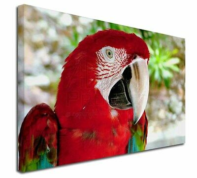 """Green Winged Red Macaw Parrot 30""""x20"""" Wall Art Canvas, Extra Larg, AB-PA11-C3020"""