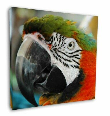 """Face of a Macaw Parrot 12""""x12"""" Wall Art Canvas Decor, Picture Print, AB-PA75-C12"""
