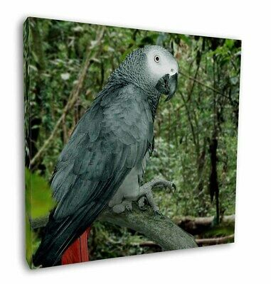 """African Grey Parrot 12""""x12"""" Wall Art Canvas Decor, Picture Print, AB-PA76-C12"""