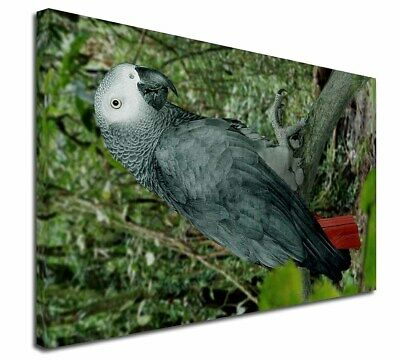 """African Grey Parrot 30""""x20"""" Wall Art Canvas, Extra Large Picture , AB-PA76-C3020"""