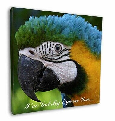 """Parrot 'I've Got My Eye On You' 12""""x12"""" Wall Art Canvas Decor, Pic, AB-PA80E-C12"""