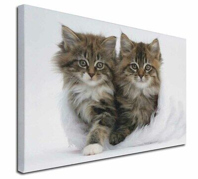 """Kittens in White Fur Hat 30""""x20"""" Wall Art Canvas, Extra Large Pict, AC-189-C3020"""