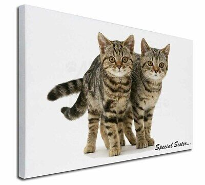 """Tabby Kittens 'Special Sister' 30""""x20"""" Wall Art Canvas, Extra Larg, AC-209-C3020"""