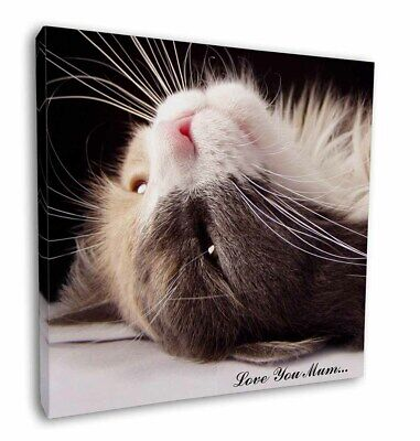 "Cat in Ecstacy 'Love You Mum' 12""x12"" Wall Art Canvas Decor, Pictur, AC-3lym-C12"