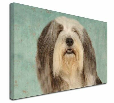 """Bearded Collie Dog 30""""x20"""" Wall Art Canvas, Extra Large Picture P, AD-BEC1-C3020"""