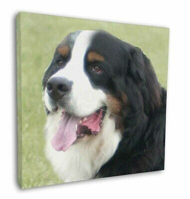 "Bernese Mountain Dog 12""x12"" Wall Art Canvas Decor, Picture Print, AD-BER1-C12"