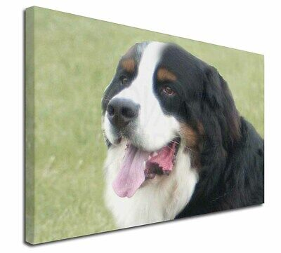 "Bernese Mountain Dog 30""x20"" Wall Art Canvas, Extra Large Picture, AD-BER1-C3020"