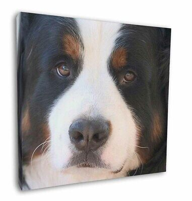 "Bernese Mountain Dog 12""x12"" Wall Art Canvas Decor, Picture Print, AD-BER5-C12"