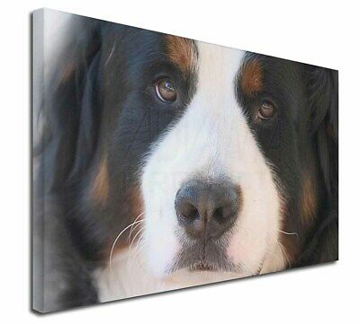 "Bernese Mountain Dog 30""x20"" Wall Art Canvas, Extra Large Picture, AD-BER5-C3020"