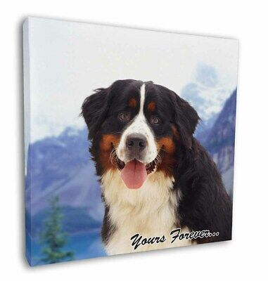 "Bernese Mountain Dog 12""x12"" Wall Art Canvas Decor, Picture Print, AD-BER6y-C12"