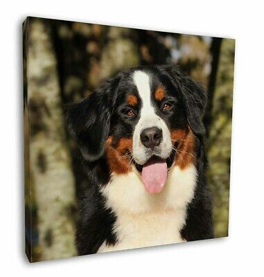 "Bernese Mountain Dog 12""x12"" Wall Art Canvas Decor, Picture Print, AD-BER7-C12"