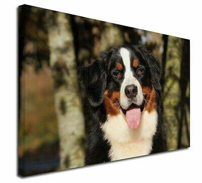 "Bernese Mountain Dog 30""x20"" Wall Art Canvas, Extra Large Picture, AD-BER7-C3020"