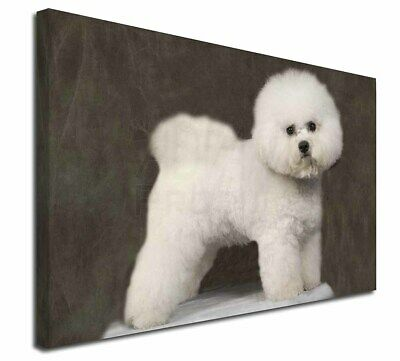 "Bichon Frise 30""x20"" Wall Art Canvas, Extra Large Picture Print De, AD-BF5-C3020"