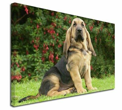 """Bloodhound Dog 30""""x20"""" Wall Art Canvas, Extra Large Picture Print , AD-BL1-C3020"""