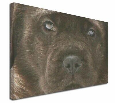 """Bullmastiff Puppy 30""""x20"""" Wall Art Canvas, Extra Large Picture Pr, AD-BMT3-C3020"""