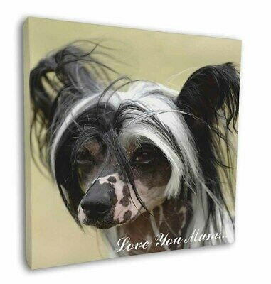 "Chinese Crested Dog 'Love You Mum' 12""x12"" Wall Art Canvas Decor, AD-CHC2lym-C12"