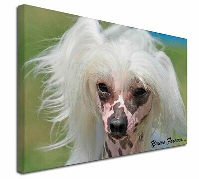 "Chinese Crested Dog ""Yours Forever..."" 30""x20"" Wall Art Canvas, , AD-CHC4y-C3020"