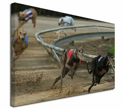 "Greyhound Dog Racing 30""x20"" Wall Art Canvas, Extra Large Picture , AD-GH1-C3020"