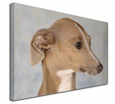 "Greyhound Dog 30""x20"" Wall Art Canvas, Extra Large Picture Print D, AD-GH4-C3020"