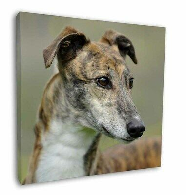 "Greyhound Dog 12""x12"" Wall Art Canvas Decor, Picture Print, AD-GH6-C12"