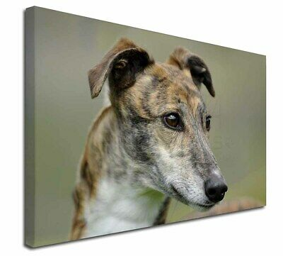 "Greyhound Dog 30""x20"" Wall Art Canvas, Extra Large Picture Print D, AD-GH6-C3020"