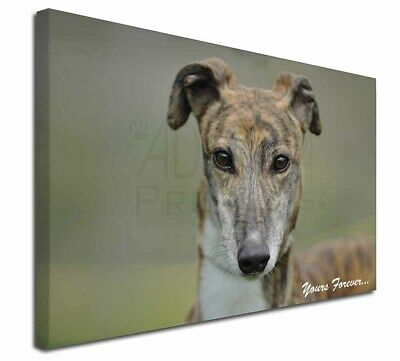 "Brindle Greyhound 'Yours Forever' 30""x20"" Wall Art Canvas, Extra , AD-GH7y-C3020"